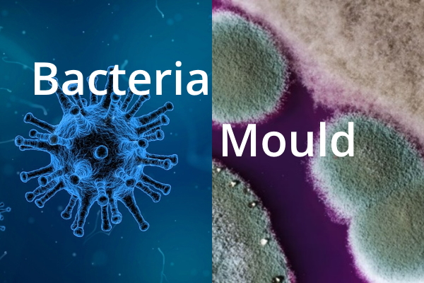 Bacteria and Mould